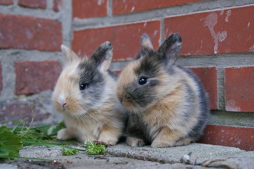 9 - konijn