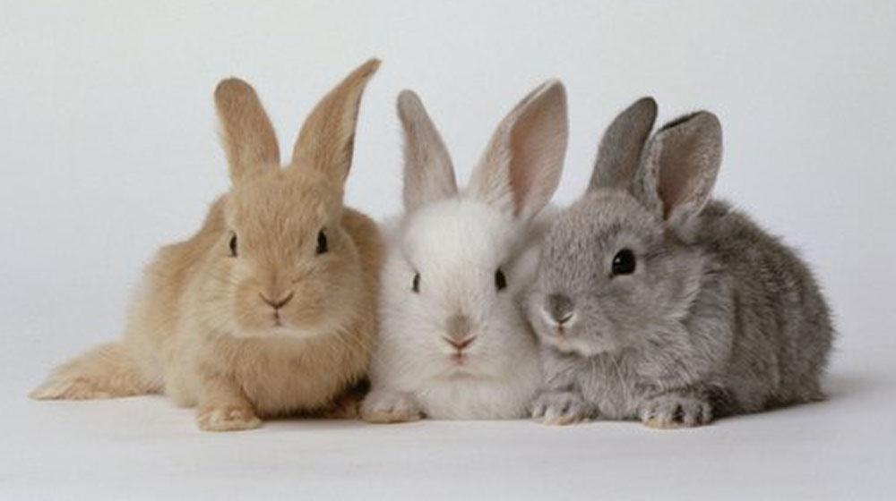 top 10 populairste konijnennamen - top 10 lijst
